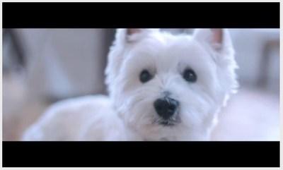 CESAR dog. CESAR(R) and MOFILM crowdsource for creative content. (PRNewsFoto/Mars Petcare)