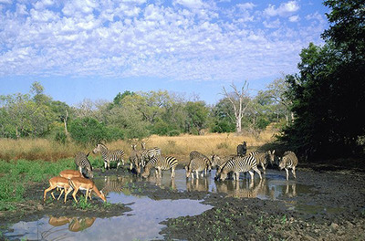 Kruger Tented Safari.  (PRNewsFoto/Freedom Africa)