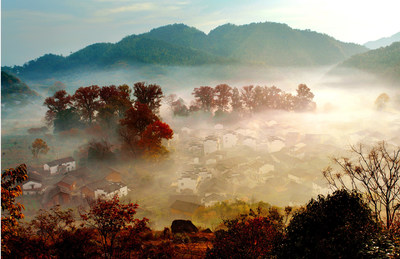 Shicheng Village (the stone city), one of the prime viewing locations of maple foliage in Wuyuan County, China, embraced the peak season of this year's fall foliage expected to arrive in early November and last through mid-December.