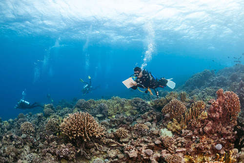 Khaled bin Sultan Living Oceans Foundation scientist, Badi Samaniego, conducts a reef fish survey in French ...