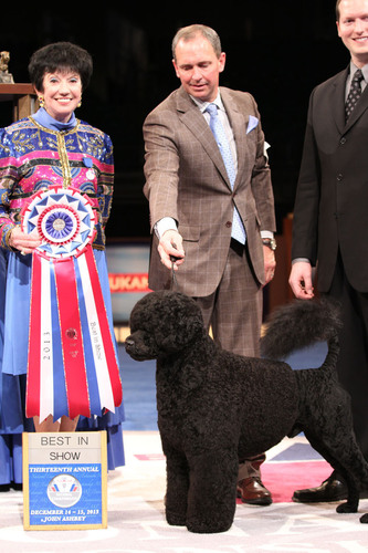 "Portuguese Water Dog ""Matisse"" Wins Best in Show At Thirteenth Annual AKC/Eukanuba National ..."