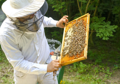 Antibiotics used by beekeepers will no longer be available over the counter in 2017. In an effort to address concerns with antibiotic resistance, the FDA has ruled that antibiotics used to treat common bee diseases will now need to be ordered by a veterinarian through a prescription or Veterinary Feed Directive (VFD). Beekeepers can no longer diagnose and treat problems requiring antibiotics without a licensed veterinarian.