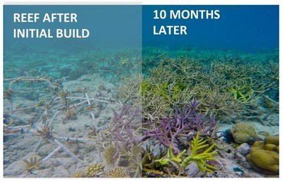 "Mars Symbioscience Associates, working alongside Mars volunteer Associates around the world via the Mars Ambassador Program, have installed over 10,000 ""Mars Coral Spiders"" underwater across two hectares of reef. The evidence shows the coral cover on the reef's rehabilitated areas increased from 10 percent to 60 percent in about 18 months, as has the reef fish population, including tuna, which had not been seen off this island for over 30 years."