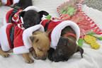 D.E.L.T.A. Rescue Pups Dreaming of Santa