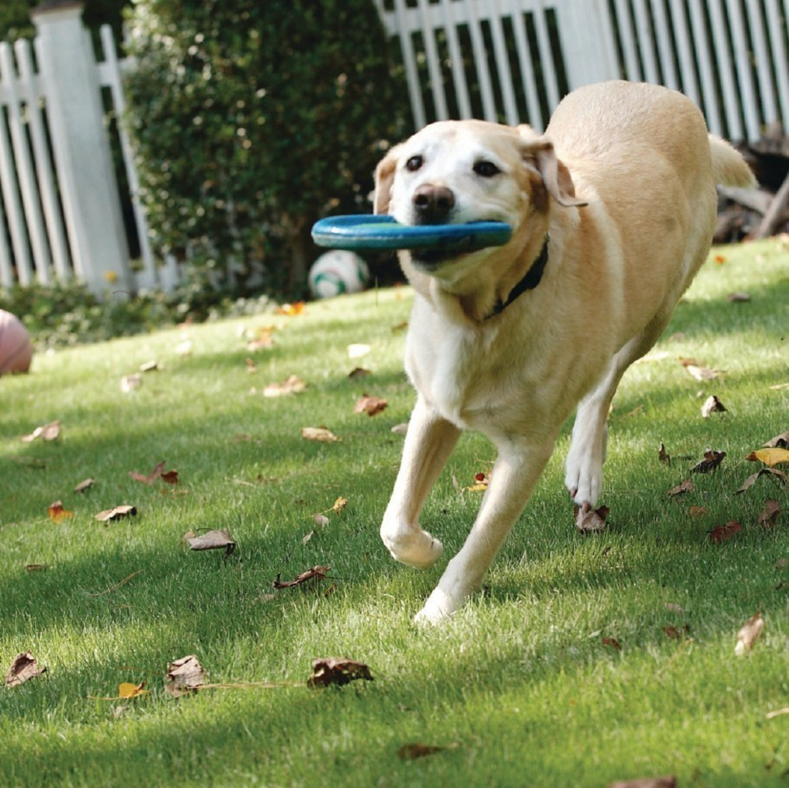 Diabetes in dogs is manageable. Using the right tools, including at-home monitoring specific for canines, can aid in better outcomes.