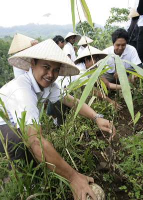 Bamboo planting in Bali. Image courtesy of John Hardy.