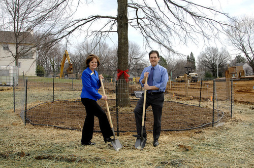 Boucher Place Plants 50 Foot Willow Oak
