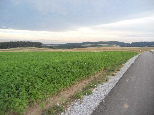 Medical Marijuana Inc. Provides Update on Industrial Hemp Production -- Hemp Crops Are Increased By