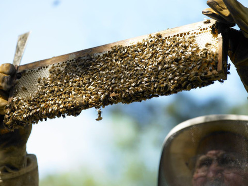 A look at the honey, by Carl Webb.  (PRNewsFoto/MtnHoney)