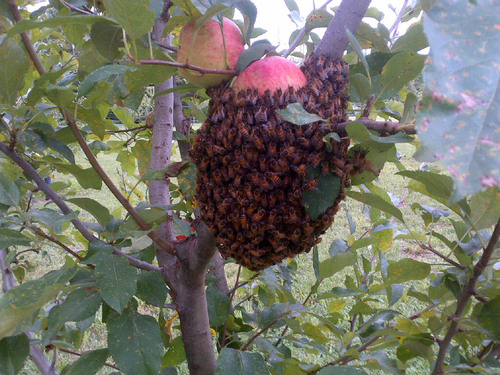 One of several thriving beehives in the apple orchard on the campus of Roanoke Cement Company in Troutville, ...