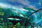 Ripley's Aquarium of the Smokies.  (PRNewsFoto/Reserve Direct)