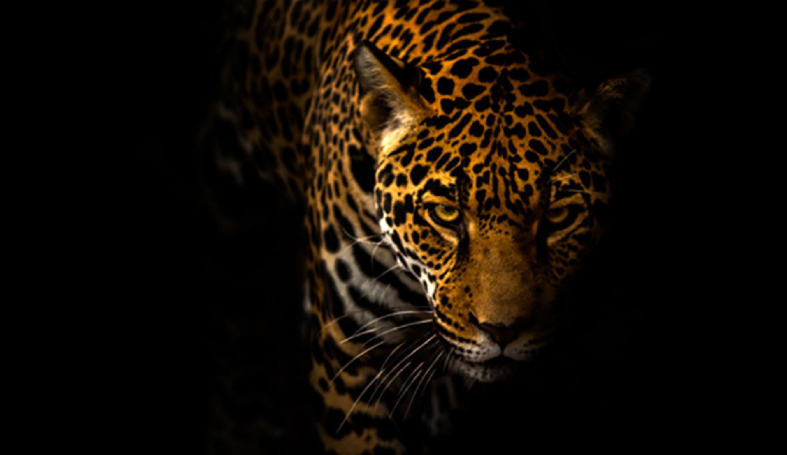 Jaguar, Center for Biological Diversity
