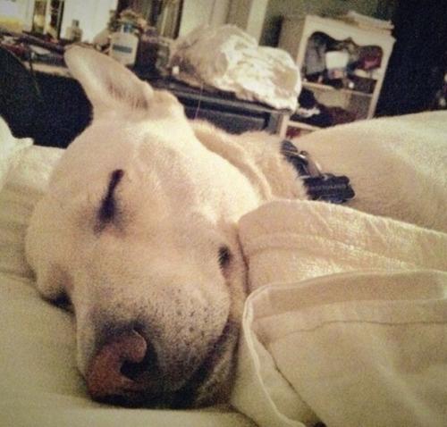Novosbed sleep survey reveals humans and pets sleep well together. (PRNewsFoto/Novosbed.com) (PRNewsFoto/NOVOSBED.COM)