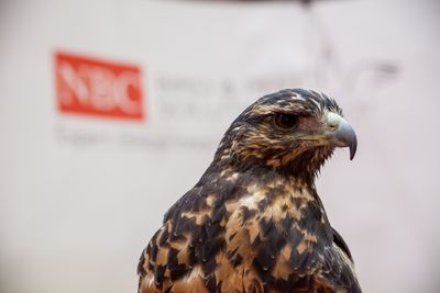 10,000 attendees and 1 falcon at Facilities Show 2014