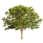 Canon U.S.A. and Arbor Day Foundation Team Up to Bring Trees to Communities Affected by Natural Disasters