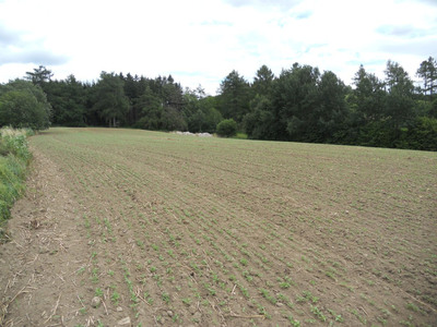 "Agricultural Facility ""4"" Raw Land with Hemp Planted 3 Weeks Prior.  (PRNewsFoto/Medical Marijuana Inc.)"