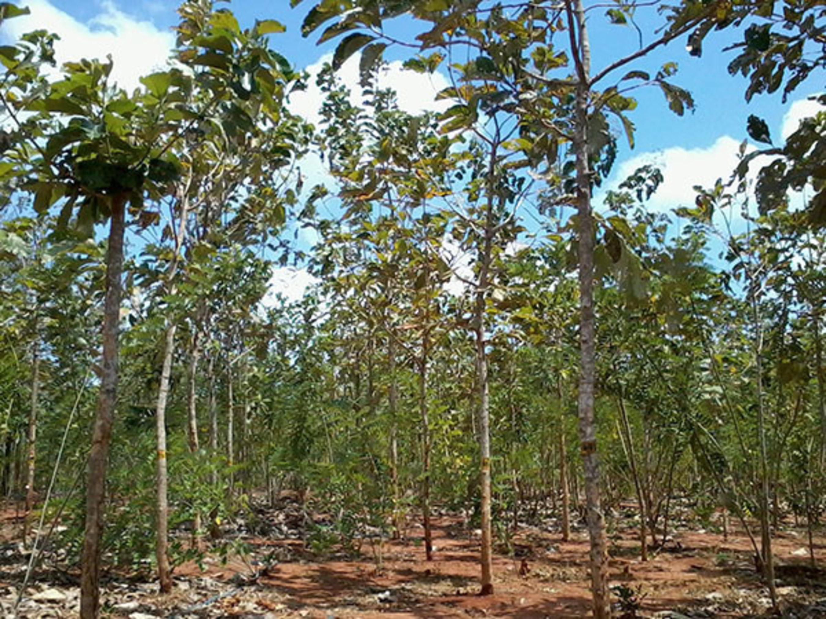 Asia Plantation Capital obtient un nouveau créneau commercial stimulant pour des plantations