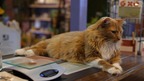 Cat's Lifesaving Efforts Win Nationwide Pet Rescue Contest