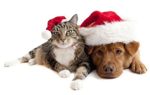 Twelve Days of Home for the Holidays - $12 Dog & Cat Adoptions