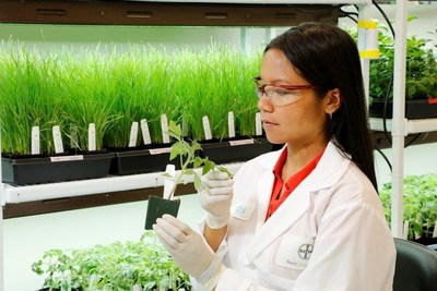 Bayer CropScience research scientist observes plant in laboratory (PRNewsFoto/Bayer CropScience)