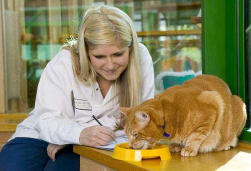 WikiVet and Mars Petcare Announce New Materials on Cat and Dog Nutrition for Health (PRNewsFoto/Mars Petcare)