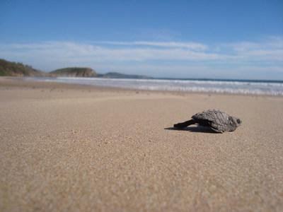Guests release baby sea turtles into the ocean at Las Alamandas Resort.