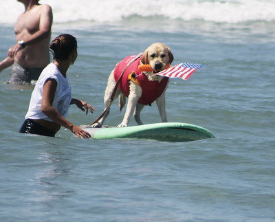 On 9/11, PAWtriotic Surf Pup Fred Honors Military and First Responders at Helen Woodward Animal Center's Surf Dog Surf-A-Thon, sponsored by Blue Buffalo.
