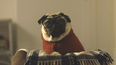 Vision Direct 'A Pug's Christmas' Campaign (PRNewsFoto/Vision Direct Europe Limited)