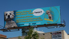 Billboard in Los Angeles asks Ashton Kutcher and Demi Moore to Tweet their over ten million followers and tell them about conditions in our nation's puppy mills.  Located at Lankershim and Moorpark and sponsored by Main Line Animal Rescue and Jana Kohl, the billboard includes the web address www.dogsinacage.com.  (PRNewsFoto/Main Line Animal Rescue, Brian Weed Photography)