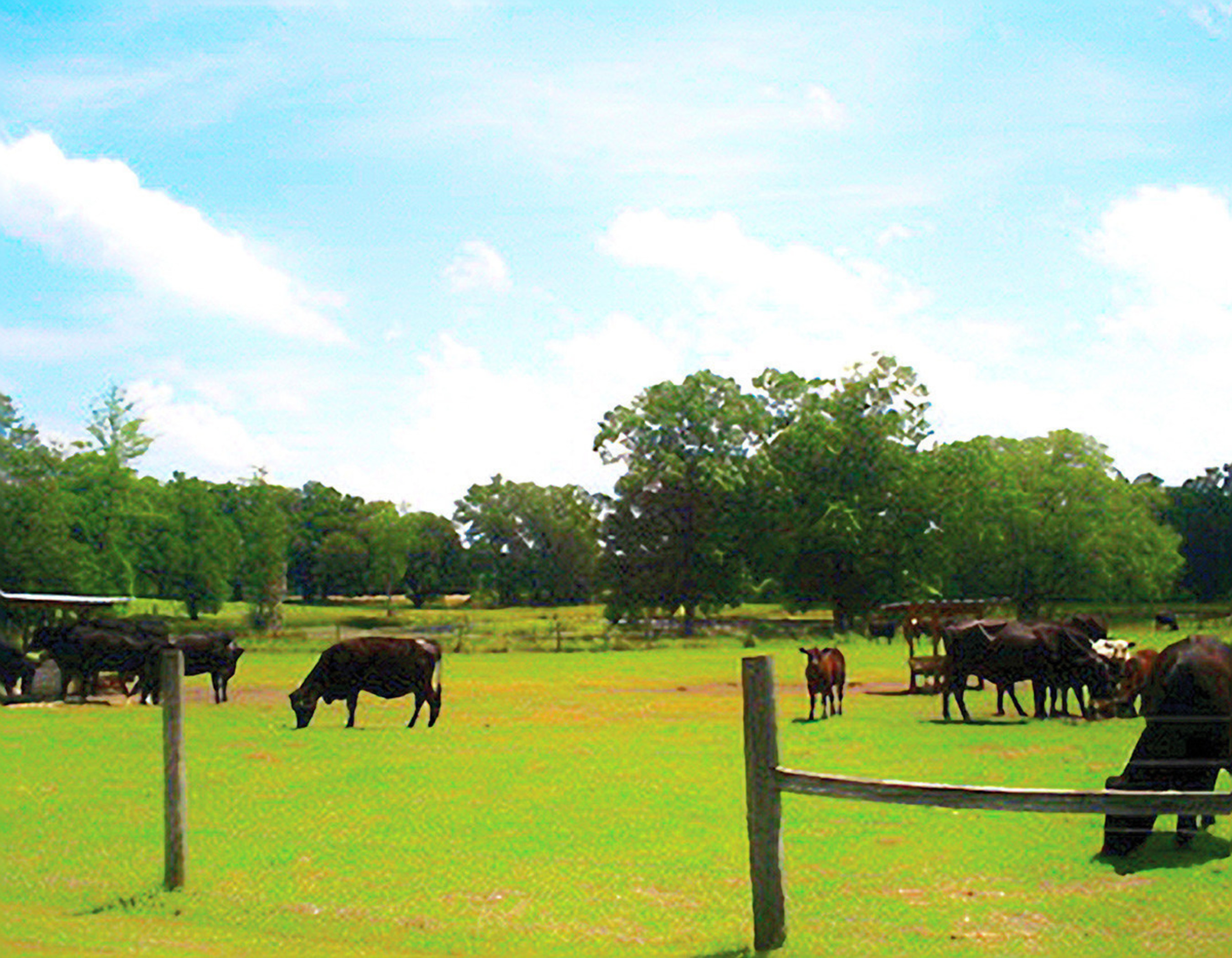 The 420 acre Russell Cattle Ranch, known as the Ponderosa of Florida.