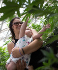 Nicole Sena holds her daughter Amylea as she reaches for a medical cannabis plant.