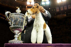 Purina Pro Plan Returns As Presenting Sponsor of the 139th Annual Westminster Kennel Club Dog Show
