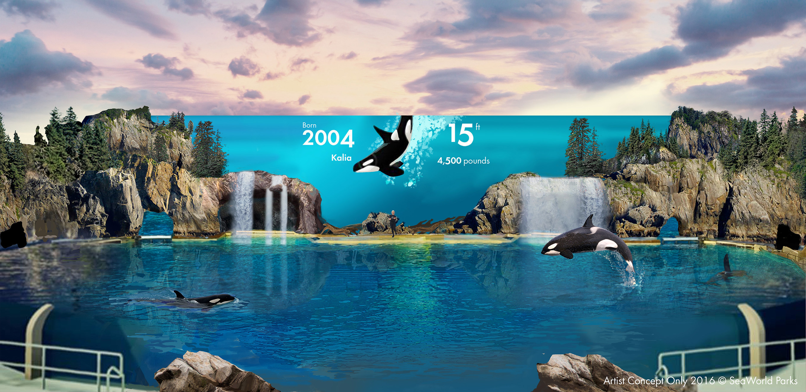 SeaWorld San Diego will introduce new, inspiring and educational orca encounters with the feel of a live documentary. The new behavior-based orca experience will inspire as well as educate guests about the majesty of these complex animals, and reinforces the company's commitment to provide educational experiences with the park's resident orcas.  These presentations will focus on orca enrichment, exercise, and overall health. This change will start in its San Diego park next year, followed by Orlando and then San Antonio by 2019. Credit: Artist Concept Only - 2016 (C)SeaWorld Parks