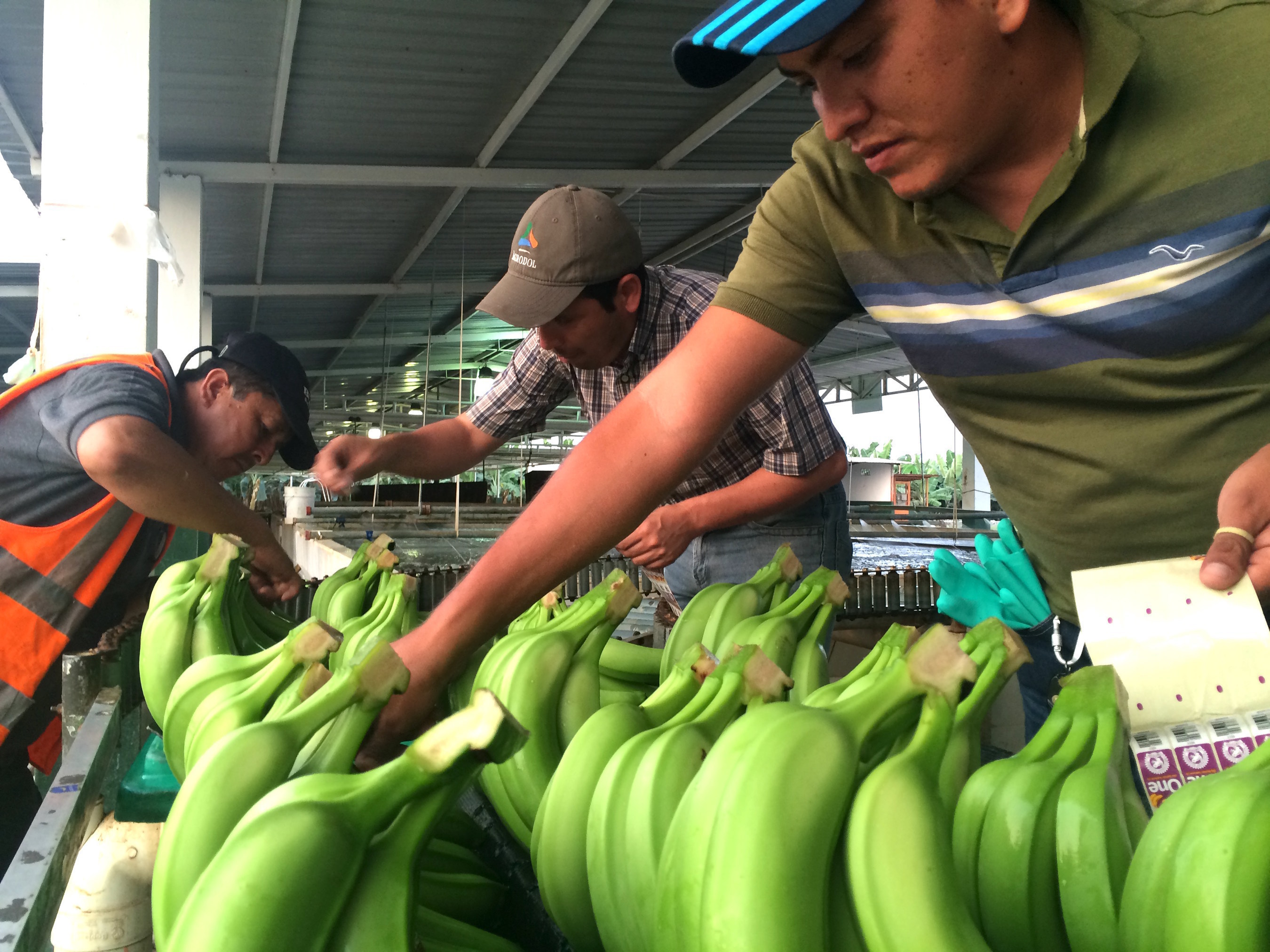 Frequentz, Inc, a global leader and champion of end-to-end visibility, has entered an exclusive global partnership with its customer, One Banana, to help meet the worldwide demand for responsibly produced food.