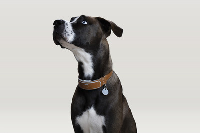 The LINK AKC(TM) smart collar on display!