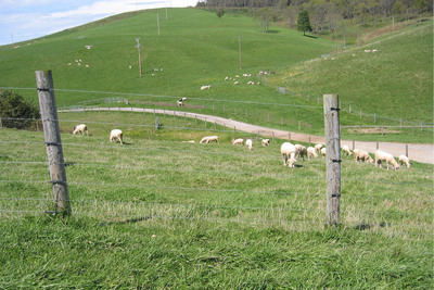 Zareba Offers Tips to Cost-effectively Maintain Electric Fencing Systems