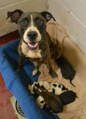 """An example of a mom, Shiva, and her 2 week old healthy puppies at an Atlanta, GA facility on the urgent list. """"I have to believe if people knew they could save a puppy or kitten's life by letting it stay with them for a few days, they would act now to save them. We are providing that platform."""""""