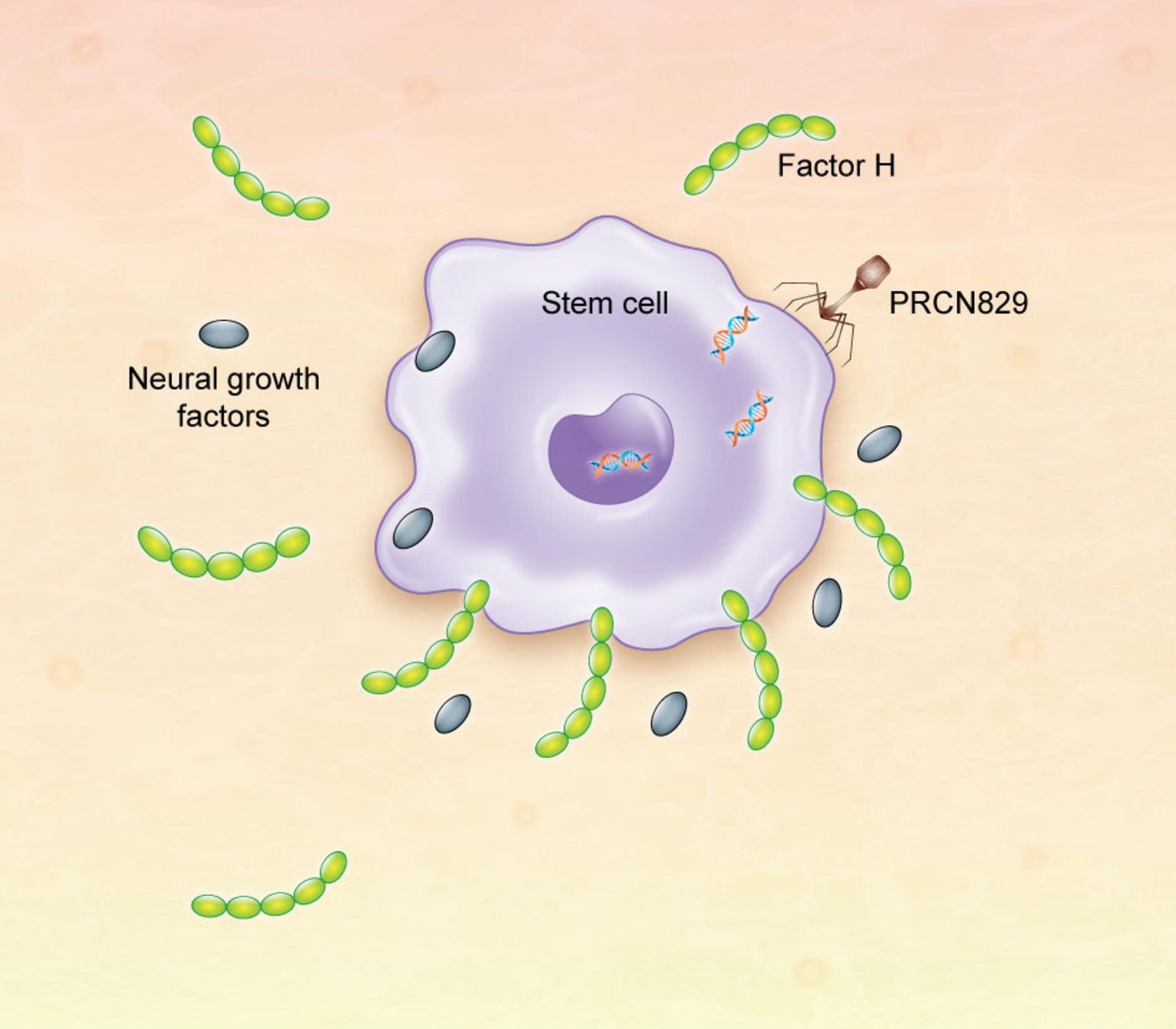 Neuralgene image 2.  (PRNewsFoto/Neuralgene)
