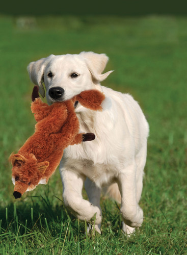 Stuffing-Free Dog Toy Perfect for Dogs of All Sizes