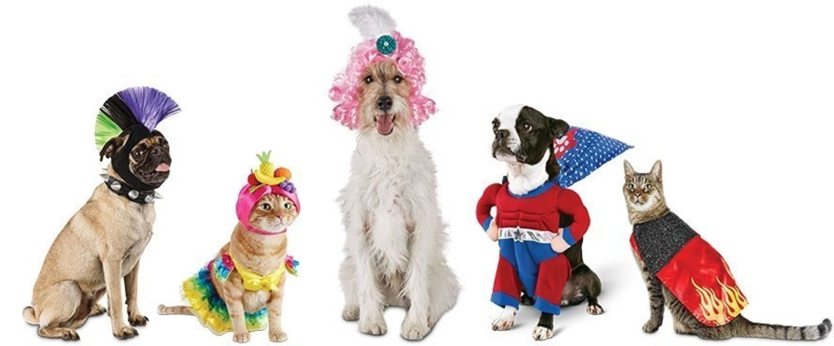 Petco has festive pet parents and their pets covered with a fun assortment of pet costumes and accessories