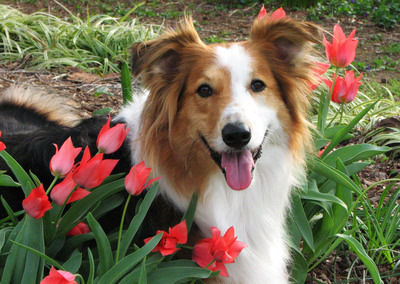 Bailey, winner of BISSELL's Most Valuable Pet Photo Contest in 2011.  (PRNewsFoto/BISSELL Homecare, Inc.)