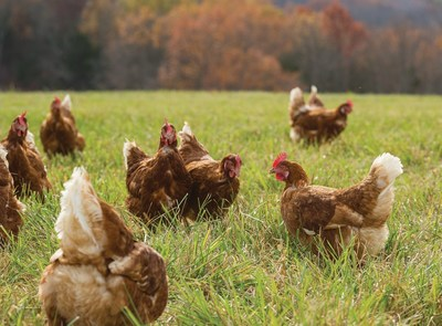 As many companies shift to Cage Free operations, Egg Innovations creates 'Freedom Tastes Better' campaign and takes humane standards up a notch with Free Range, Pasture Raised egg production.