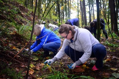 WebMD Cares Impact Day 2016 - Over two days, Portland employees worked with the Forest Park Conservancy on maintaining and restoring trails.