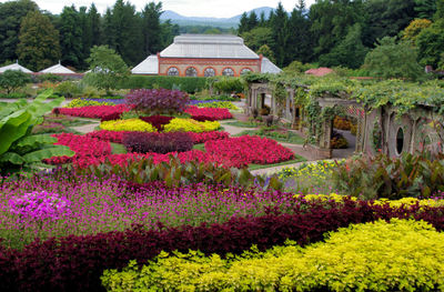 Biltmore's summertime gardens offer a feast of rich colors and scents