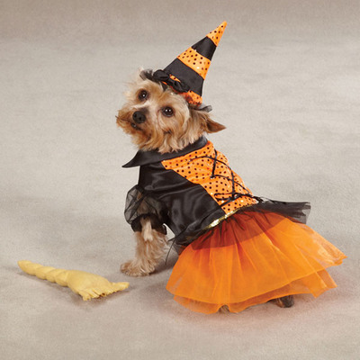 Spellhound Witch Dog Costume by Casual Canine.  (PRNewsFoto/Wayfair.com)