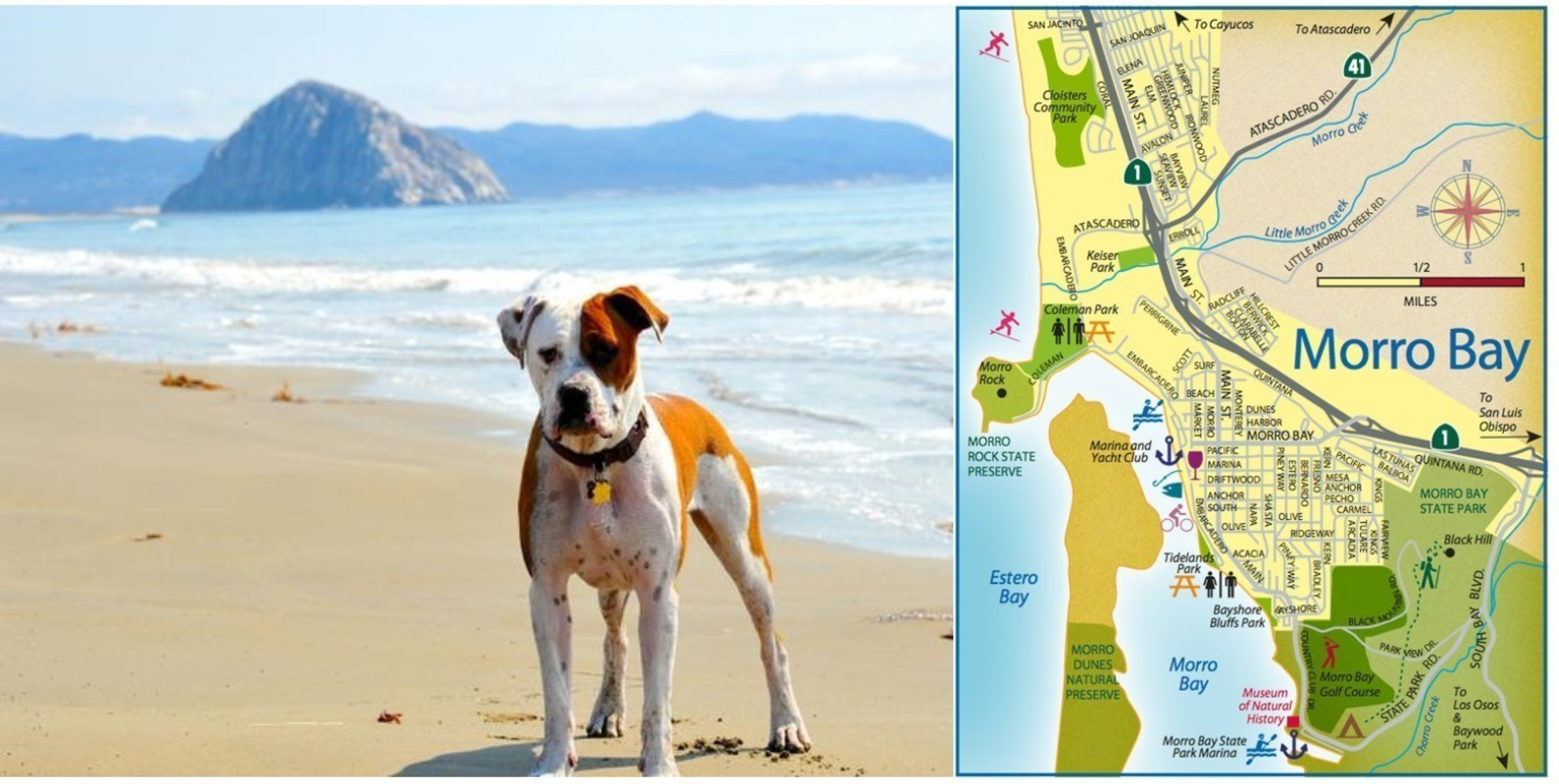 Burn Away Your Holiday Calories Rain or Shine in Morro Bay, CA and Find What's New this Winter and