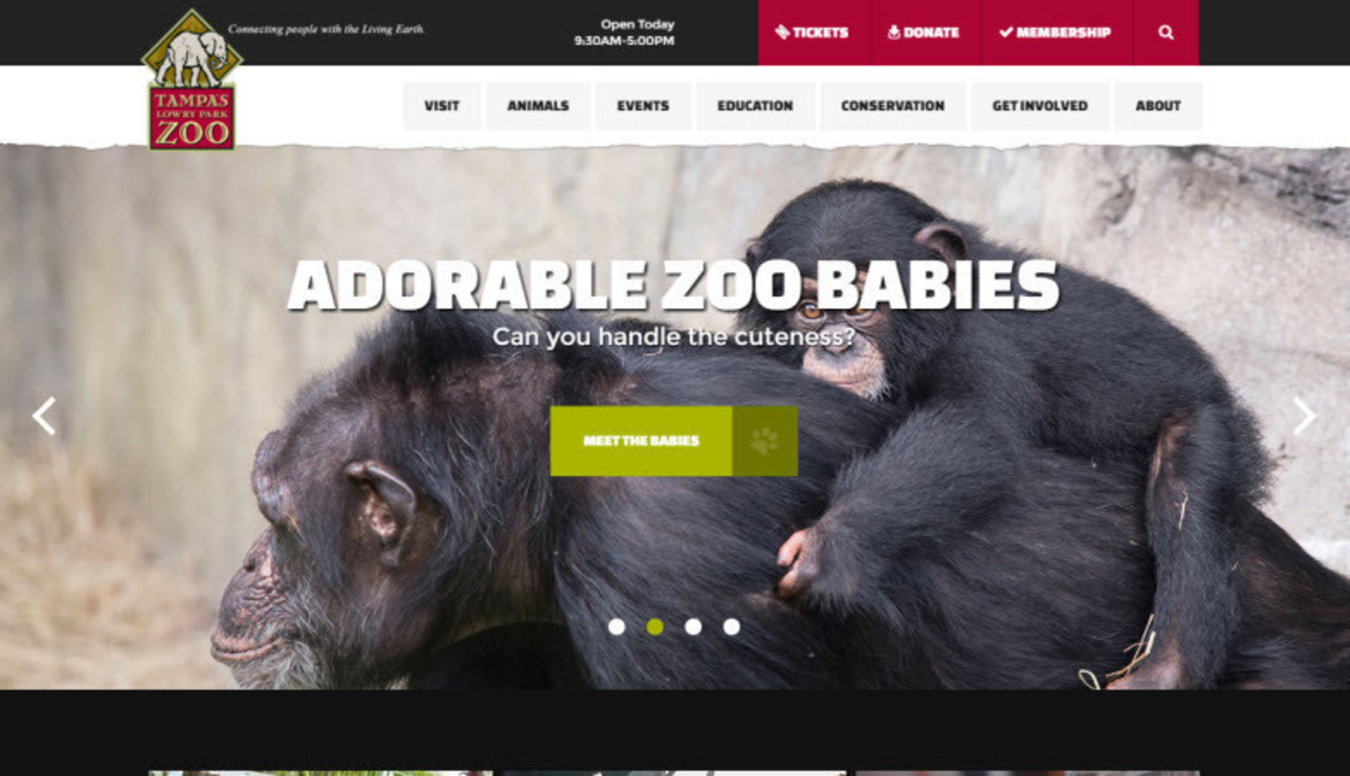 Roger West Announces That Tampa's Lowry Park Zoo Wins Telerik Sitefinity 2015 Website of the Year Award