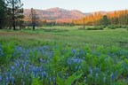 Ackerson Meadow Gifted to Yosemite National Park