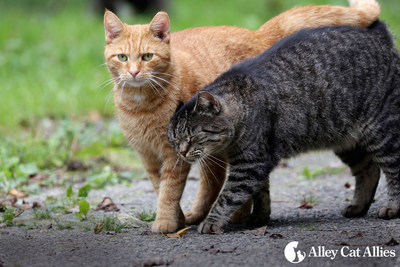 Alley Cat Allies National Feral Cat Day is on Sunday, Oct. 16, 2016. Easy tips to get involved are at www.NationalFeralCatDay.org. Cat advocates worldwide have scheduled more than 1,000 events, more than any in the 16-year history that Alley Cat Allies has held National Feral Cat Day.