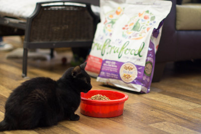 Rescued cat enjoying Wellness Natural Pet Food from 25 ton donation to CAABR.